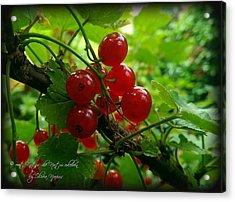 Food Berry Acrylic Print by Olivia Narius