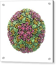 Foot And Mouth Virus Particle Acrylic Print by Animate4.com/science Photo Libary