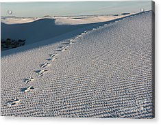 Foot Prints In The Sands Acrylic Print