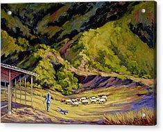 Foothill Sheepherder Acrylic Print