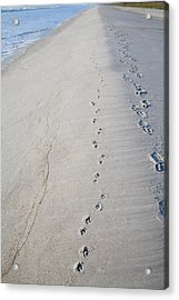 Footprints And Pawprints Acrylic Print