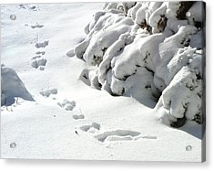 footprints in the Snow Acrylic Print by Rachel Christine Nowicki