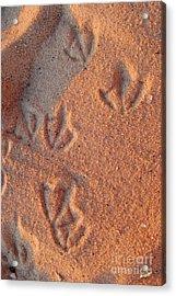 Footprints  Acrylic Print by Jon Neidert