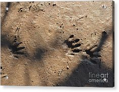 Footprints2 Acrylic Print