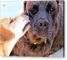 For The Love Of Dogs Acrylic Print by Janice Rae Pariza