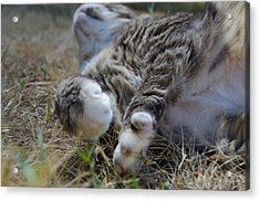 For The Love Of Stretching Acrylic Print by Marilyn Wilson