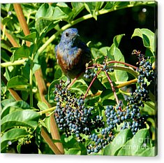 For You - Blue  - 2 Acrylic Print by Jacquelyn Roberts