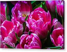 For You - Featured 3 Acrylic Print by Alexander Senin