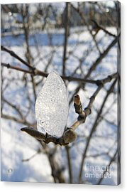 Acrylic Print featuring the photograph For You by Jane Ford