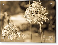 For You Acrylic Print by Sue OConnor