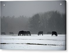 Acrylic Print featuring the photograph Foraging by Glenn Gordon