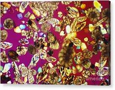 Foraminifera Lm Acrylic Print by Charles Gellis