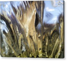 Acrylic Print featuring the photograph Forbidden Forest by Martin Howard