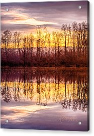 Foreboding Acrylic Print by Tom Cameron
