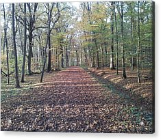 Forest Acrylic Print by Andrew Martin