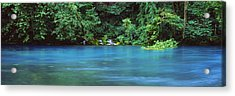 Forest At The Riverside, Big Spring Acrylic Print