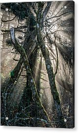 Forest Beams Acrylic Print by Mike  Walker