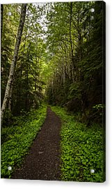 Forest Beckons Acrylic Print by Mike Reid