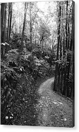 Forest Black And White 12 Acrylic Print by Falko Follert