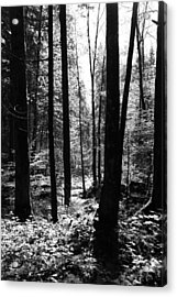 Forest Black And White 13 Acrylic Print by Falko Follert