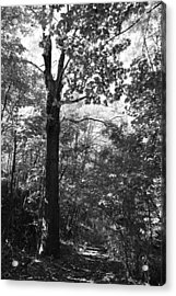 Forest Black And White Acrylic Print by Falko Follert