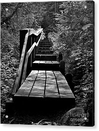 Forest Boardwalk Acrylic Print by Laura  Wong-Rose