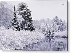 Forest Covered With Snow Acrylic Print by Rod Planck