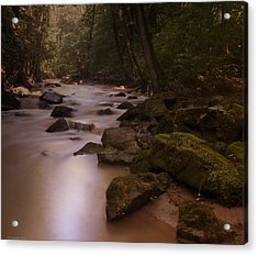 Forest Creek Acrylic Print
