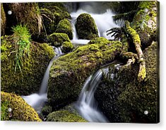 Forest Creek Streaming Between Moss Acrylic Print by Dirk Ercken