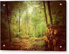 Forest Acrylic Print by Daniel Precht
