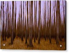 Forest Escape Acrylic Print