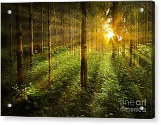 Forest Fairytale Acrylic Print by Bernadett Pusztai