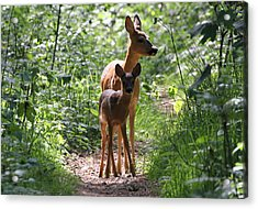 Forest Fawn Acrylic Print by Ger Bosma