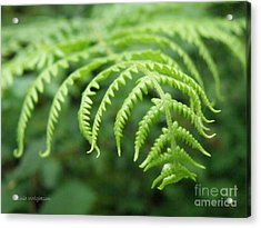 Forest Fern Acrylic Print by Lainie Wrightson