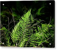 Forest Ferns Acrylic Print