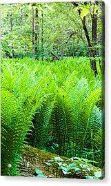 Forest Ferns   Acrylic Print