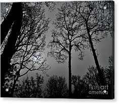 Forest Fingers Acrylic Print