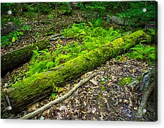 Forest Floor Gosnell Big Woods Acrylic Print