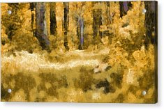 Forest Floor In Autumn Acrylic Print by Dan Sproul