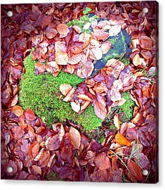 Forest Floor In Fall Brown Foliage Green Moss  Acrylic Print