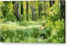 Forest Floor In Summer Acrylic Print by Dan Sproul