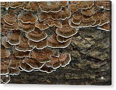 Forest Floor Number 3 Acrylic Print