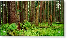 Forest Floor Olympic National Park Wa Acrylic Print by Panoramic Images