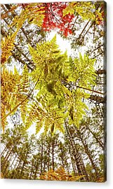 Forest Floor View Skyward Acrylic Print