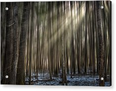 Forest Glow Acrylic Print by Gary Smith
