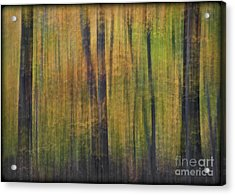 Forest Glow Acrylic Print by Susan Candelario