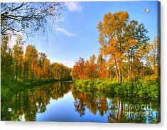 Acrylic Print featuring the photograph Forest Golden Green by Boon Mee