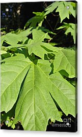 Forest Greens Acrylic Print