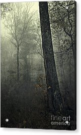 Forest Acrylic Print by HD Connelly