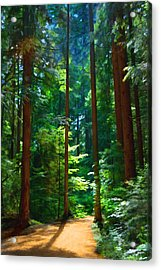 Forest Heights Acrylic Print by John Robichaud